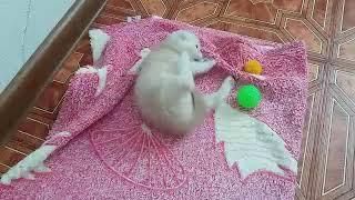 Маленький котёнок  скучает  за мамой