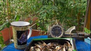 Томаты  рыбная подкормка .