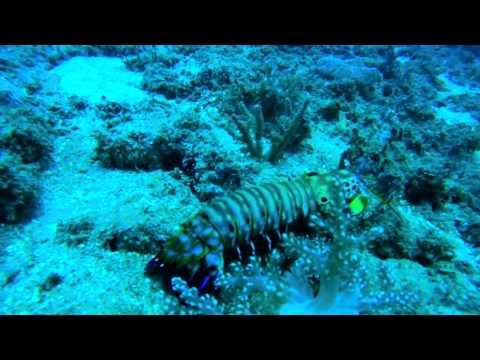 bali, tulamben, indonesia, scuba, diving, photography, underwater, beach, snorkel, padang, bai, sanurmanta, point, manta, fish, lionfish, nemo, clownfish, turtle, school, gopro, ikelite, inon, tokina, wide, angle, travel, zeagle, stingray, jackfish, USS, Liberty, crystal, bay, anemone, damselfish, trevally, big, eyed, jacks, wreck, reef, tourism, seraya, lovina, boat, nusa, penida, lembongan, Scuba Diving, baliscubamasters, atlantis, dive, diego, weta, Water, Swimming, Ocean