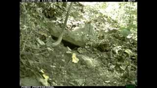 Time Lapse of a Snake Den in the southern tier of New York.