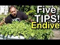5 Tips How To Grow A Ton Of ENDIVE In Just One Raised Bed Container mp3