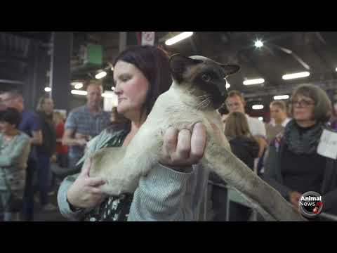 FIFe World Cat Show 2017 - Nominations Category 4