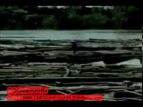 boomerang - reboisasi (instrumental)