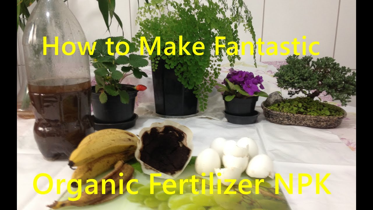 How to make organic fertilizer for your vegetable garden - When to fertilize vegetable garden ...
