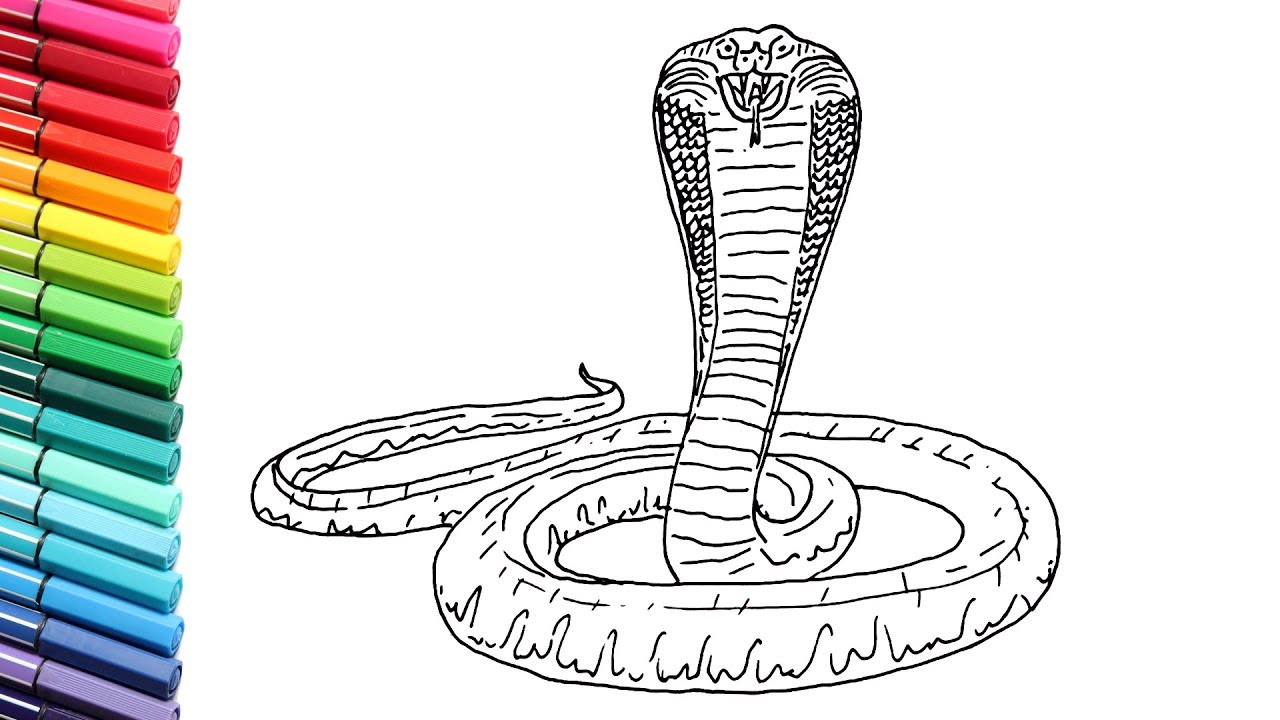 How to Draw King Cobra Snake - Drawing and Coloring Snake ...