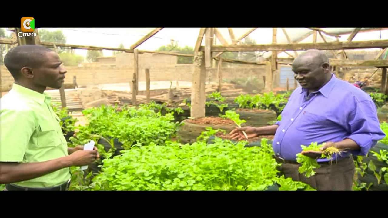 Smart Farm Vertical Sack Farming