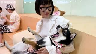 街角から:北京・柴犬、中国を行く