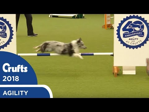 Agility - Kennel Club British Open Final (Jumping) Part 2 | Crufts 2018