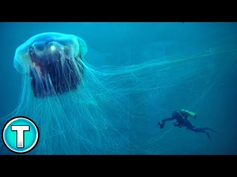 Lion's Mane Jellyfish | World's Weirdest Animals
