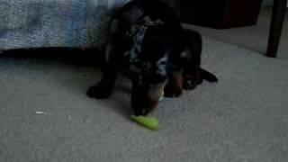 Sassy Eating A Pepper
