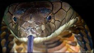 Самые ужасные змеи на планете Земля.  Змеи -  документальный фильм