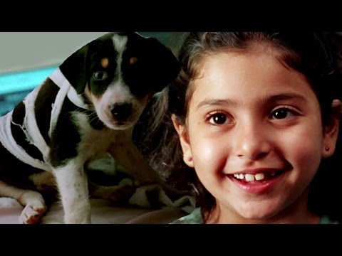 Bollywood Full Movies - Halo - हेलो - New Hindi Dubbed Movies – Latest Kids Animal Film – Dog Movies