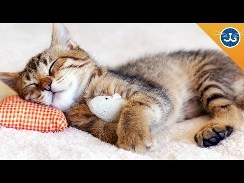Train Your Cat to Let You Sleep