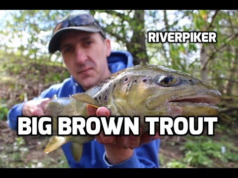 Big Brown Trout lure fishing (video 137)