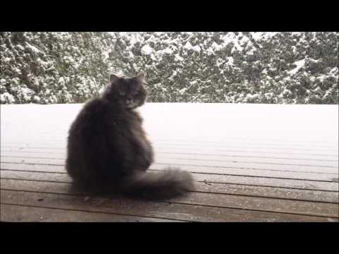 This cat absolutely loves to play in the snow!