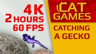 CAT GAMES - CATCHING A GECKO (Entertainment Video For Cats) 4K 60FPS 2 HOURS