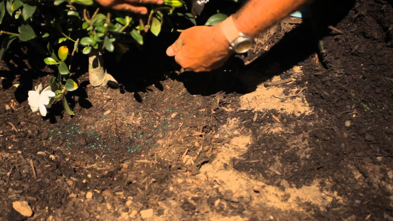 How to Transplant a Gardenia Bush : Garden Savvy