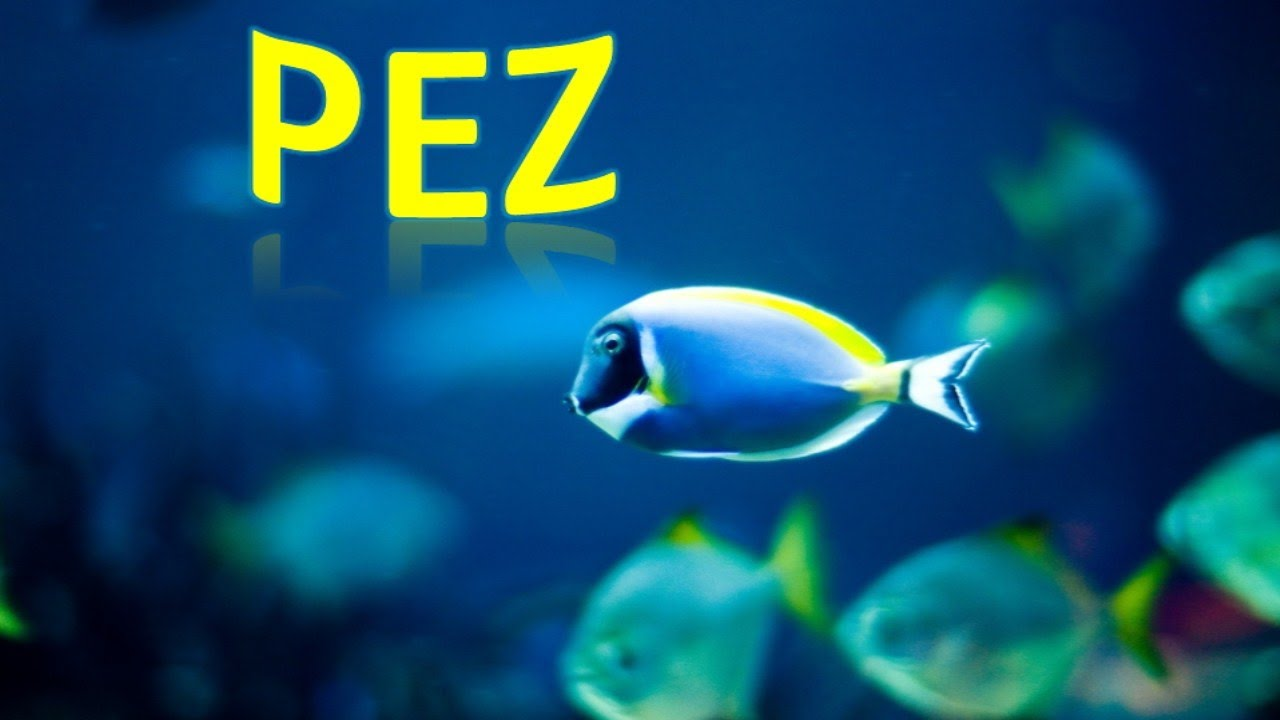¡Bajo El Mar! Animales Marinos Para Niños, Sea Animals in Spanish for Children (Canción Infantil) HD