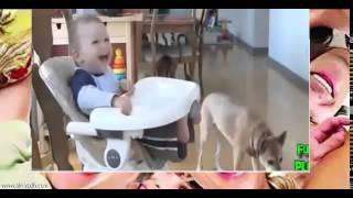 Лучший из истерического смеха детей в собак и кошек сборки #3
