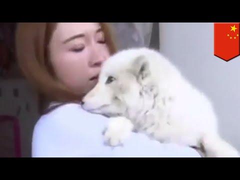Anak anjing wanita ini ternyata rubah - TomoNews