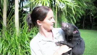 Australia Zoo - Black and White Day for Tasmanian Devils - 2011