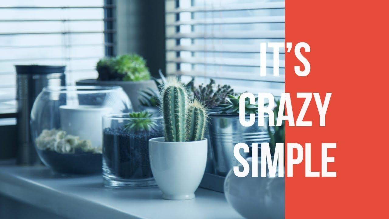 how often should i water my succulent indoor plants youtube. Black Bedroom Furniture Sets. Home Design Ideas