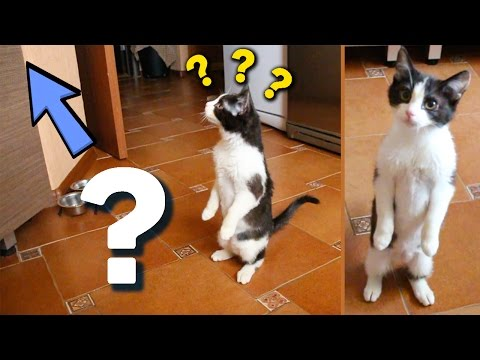 Thumbnail for Cat Video STANDING CAT