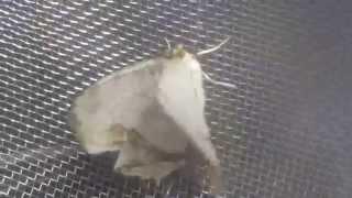 羽化直後の蝶を発見し保護・観察後放つ.