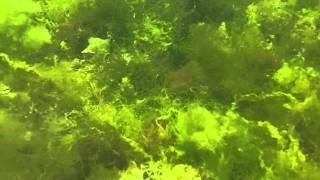 Азовское море(Семь минут на дне Азовского моря., 2011-07-23T13:38:53.000Z)