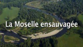 La Moselle ensauvagée