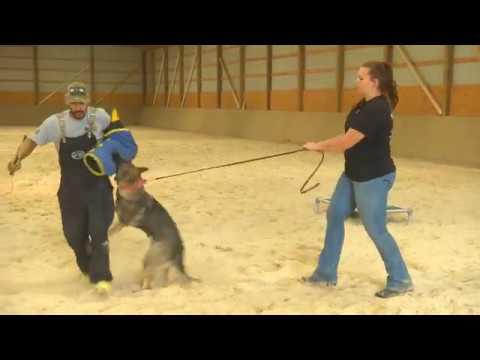 """Prufenpuden Farms Indoor Training Arena W/""""Gabi"""" 9 Months German Shepherd For Sale"""