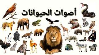 أصوات الحيوانات للأطفال (حيوانات الغابة) فيديو يضم أكثر من 30 نوعاً من حيوانات الغابة
