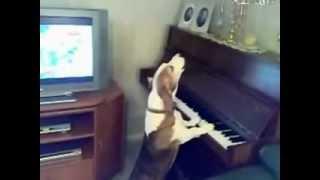 Поющая и играющая собака