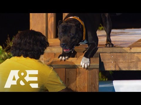 Pitbull Mix Leonittis Conquers His Fear of Water | America's Top Dog (Season 1) | A&E