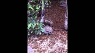 SD zoo magic/ turtle porn