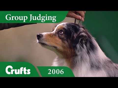 Australian Shepherd wins Pastoral Group Judging at Crufts 2006
