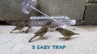 Awesome!  3 Easy bird trap