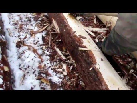 Как ошкурить дерево? / Для чего снимать кору с дерева?