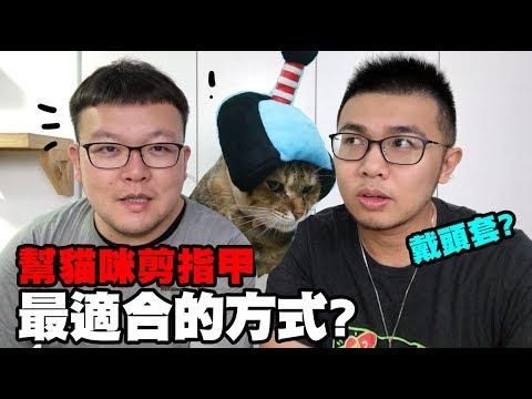 【幫貓剪指甲最適合的方式?】志銘與貍貓閒聊 - YouTube