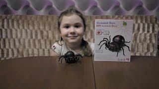 ШОК Большой черный паук spider tarantula с красными глазами бегает от соленой воды