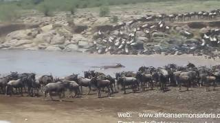 Kenya safari - Watch wildebeest Migration in Masai Mara named the 7th Wonder of the World