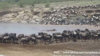 Kenya safari - Watch wildebeest Migration in Masai Mara named the 7th Wonder of the World