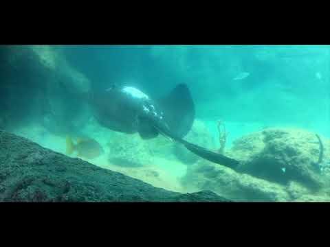 Bahamas travel video