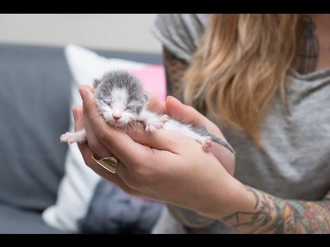 Meet Tidbit, an Orphan Kitten