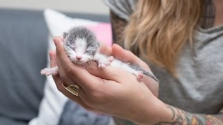 Meet Tidbit, an Orphan Kitten thumbnail