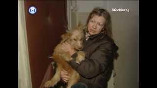 17 собак в одной квартире