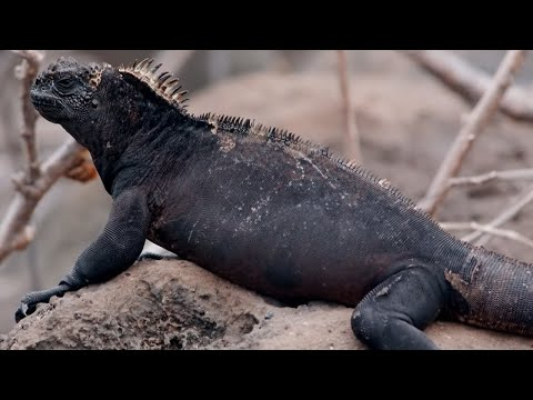 The Perentie from YouTube · Duration:  1 minutes 45 seconds