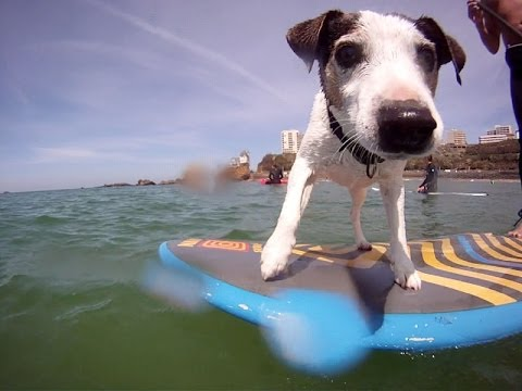 Here are top 5 animal surfers to celebrate International Surf Day