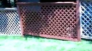 Lattice Fence Repair 3 Of 3
