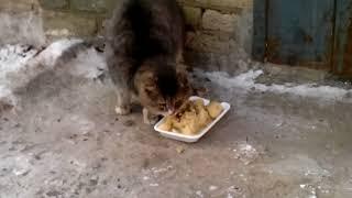 Кот противостоял собаке (прикол) Кот реально говорит Ххх